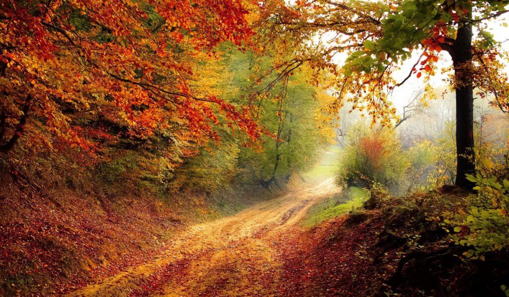 blog el rincon de mindfulness otoño