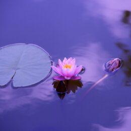 actividades elrincon de mindfulness bogota